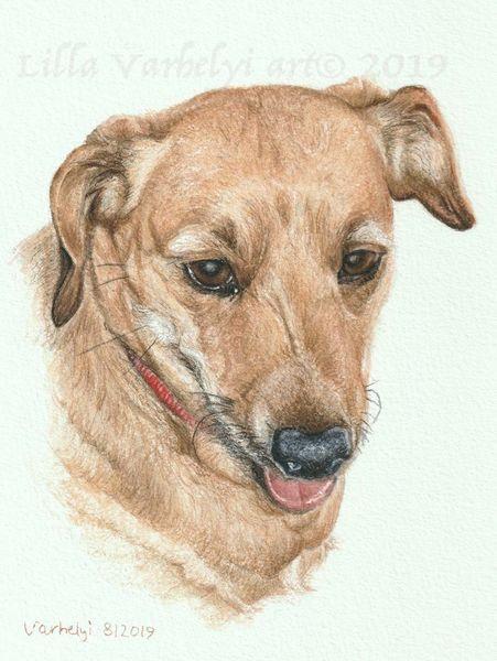 Hund, Auftragszeichnung, Tiere, Haustier, Tuschezeichnung, Tierportrait