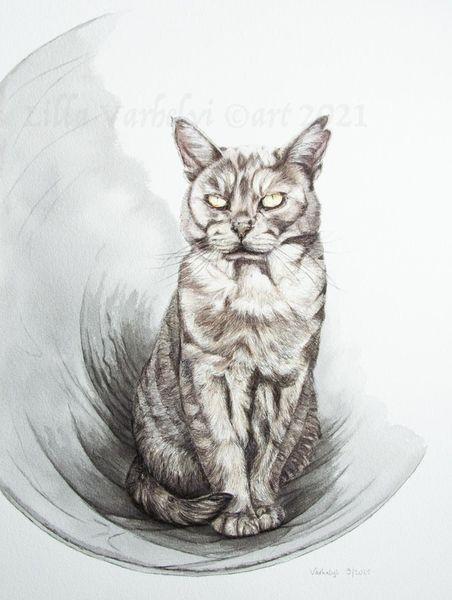 Katze, Tierportrait, Tunnel, Schwarz, Tuschmalerei, Zeichnungen