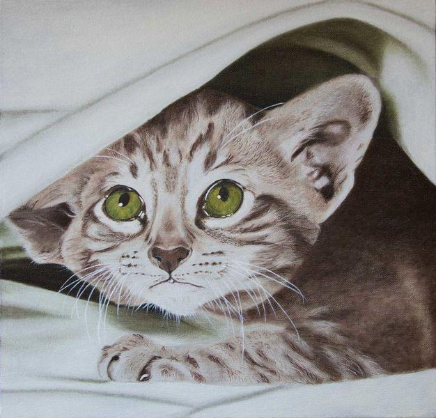 Tiere, Katze, Ölmalerei, Augen, Katzenportrait, Jung