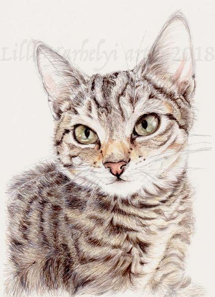Tusche, Tierzeichnung, Katze, Tiere, Tierbaby, Tierportrait