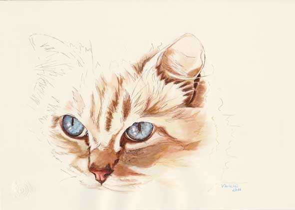 Tierportrait, Katze, Tusche, Tiere, Puppe, Katzenaugen