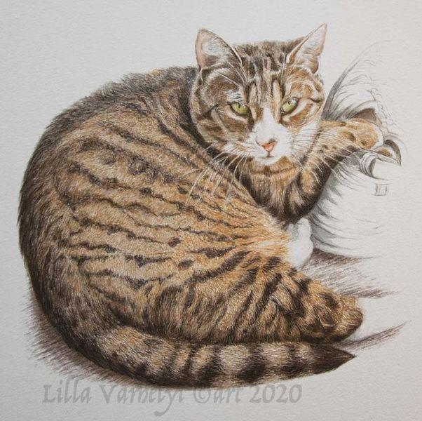 Tiger, Auftragsarbeit, Tierzeichnung, Tuschmalerei, Tierportrait, Katze
