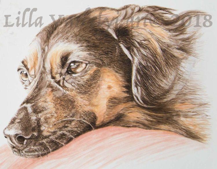 Tusche, Hund, Tuschezeichnung, Zeichnung, Tierpotrait, Tiere
