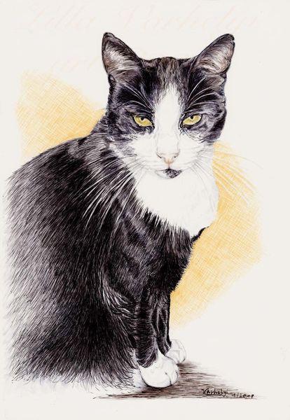 Tiere, Commission, Katze, Tuschmalerei, Auftragsarbeit, Federzeichnung