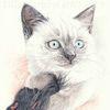 Auftragszeichnung, Tierportrait, Babykatze, Auftragsarbeit