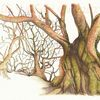Uralt, Studie, Tuschmalerei, Baum