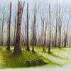 Baum, Schatten, Grün, Natur