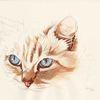 Tierportrait, Katze, Tusche, Tiere