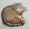 Tierportrait, Tuschmalerei, Katze, Tiger