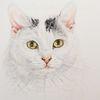 Auftragszeichnung, Katze, Tierzeichnung, Tierportrait tusche