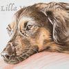 Tusche, Tuschezeichnung, Hund, Zeichnung