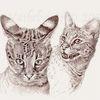 Tuschezeichnung, Katze, Savannahcat, Monochrom