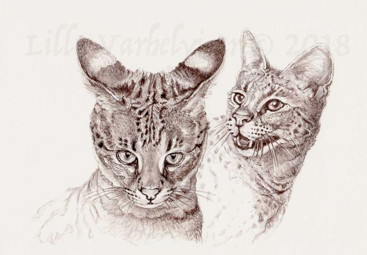 Katze, Tusche, Katzenkrimi, Tuschezeichnung, Savannahcat, Monochrom