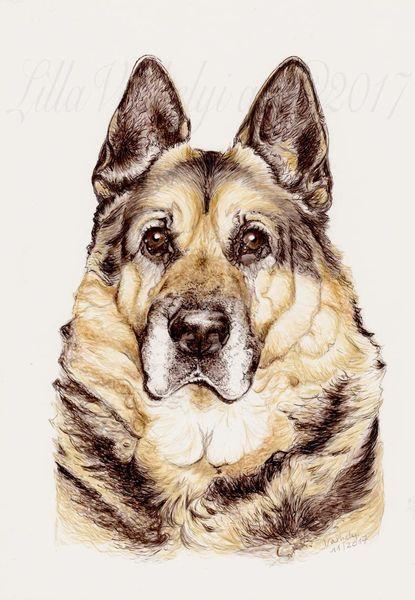 Hund, Tuschezeichnung, Portrait, Tiere, Schäferhund, Commissiondraw