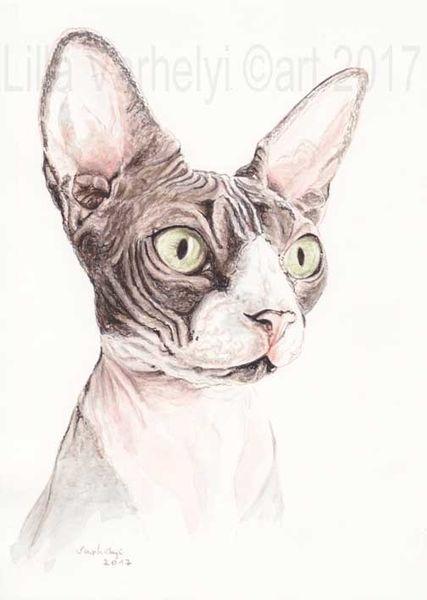 Sphynxcat, Tiere, Sphinx, Tuschmalerei, Katze, Tuschezeichnung