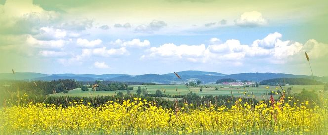 Hochnebel, Urlaub, Heimat, Wäldertourismus, Hügel, Sommer