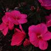 Blüte, Abendrot, Blätter, Dämmerung
