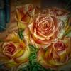 Blüte, Rose, Fotografie, Hdr