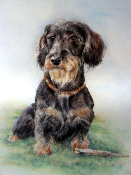 Rauhaardackel, Hundezeichnung, Zeichnungen, Dackel,