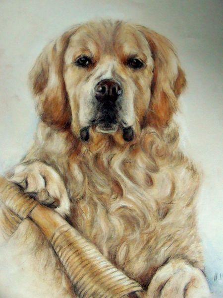 Golden retriever, Hund, Hundezeichnung, Hundeportrait, Zeichnungen
