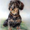 Rauhaardackel, Hundezeichnung, Zeichnungen, Dackel