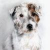 Hundeportrait, Hundezeichnung, Terrier, Zeichnungen