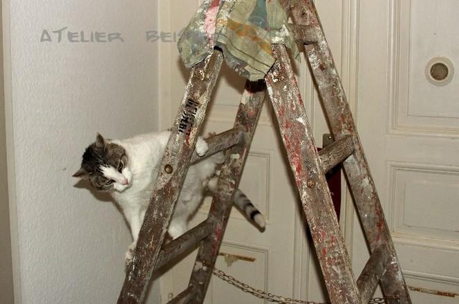 Katze, Felidae, Leiter, Cool, Malen, Fotografie