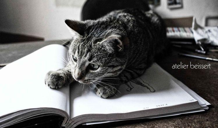 Zeichnung, Tiere, Skizzenbuch, Haustier, Arbeitsplatz, Fell