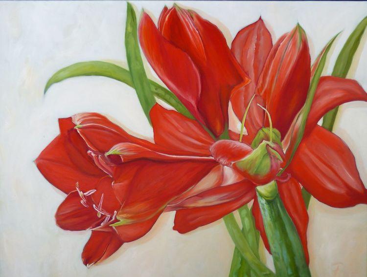 Weiß, Amaryllis, Rot, Pflanzen, Blumen, Grün