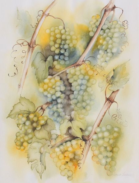 Aquarellmalerei, Weinrebe, Rebe, Aquarell