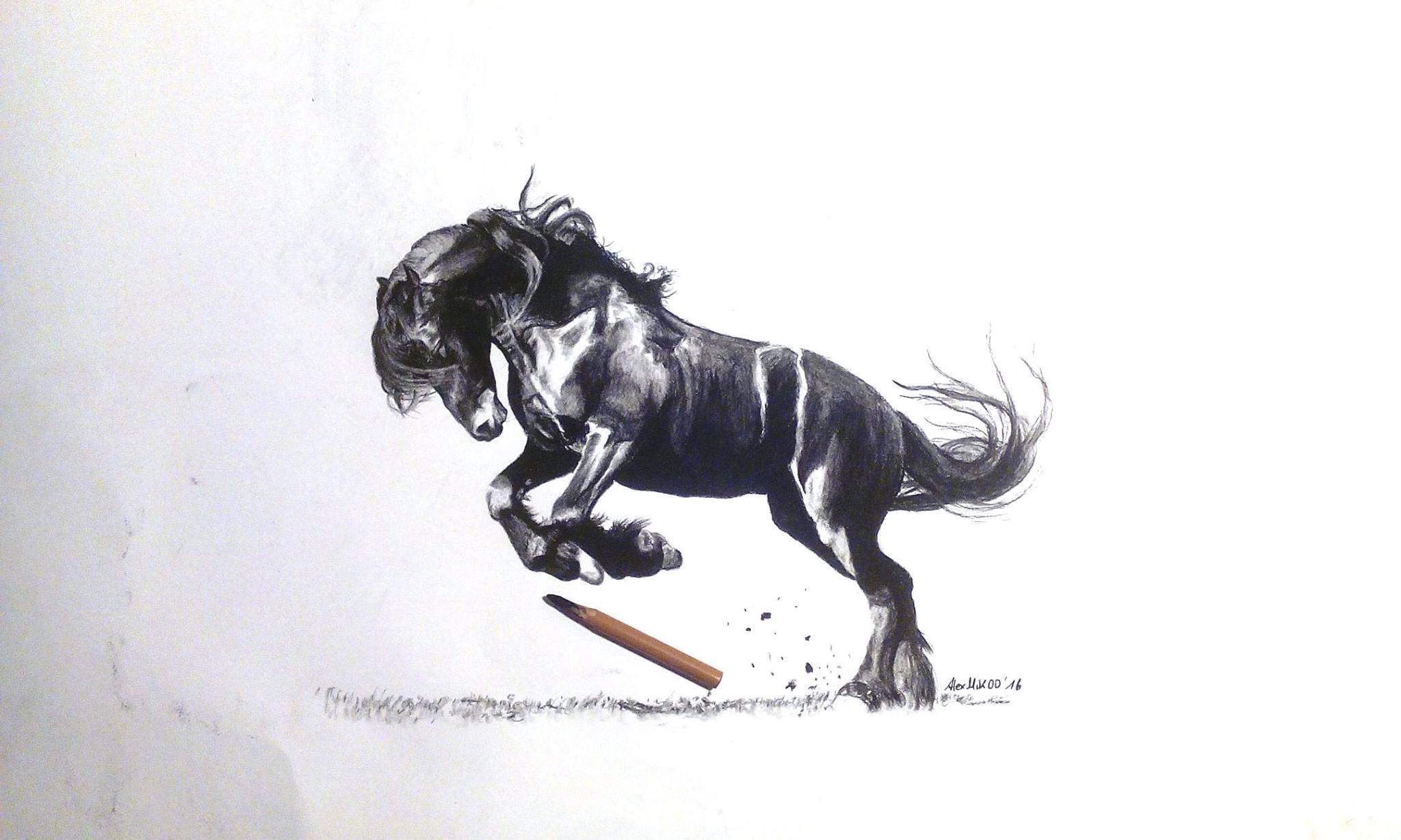Nett Sichtbar Pferd Anatomie Modell Bilder - Anatomie Von ...