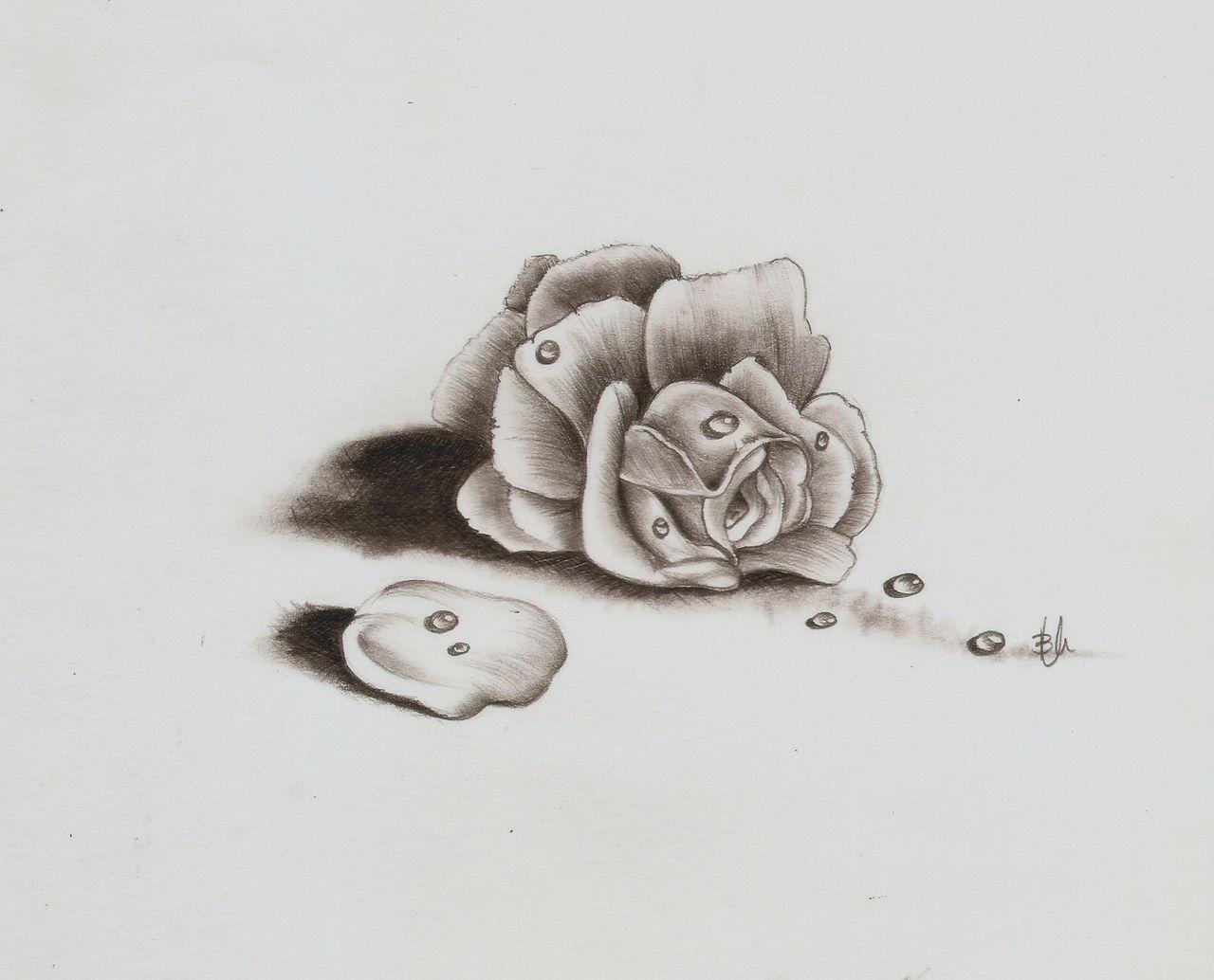 rose schatten bl te schraffur rose von biianka bei. Black Bedroom Furniture Sets. Home Design Ideas