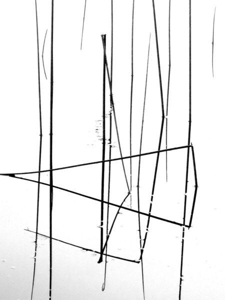 Binsen, Wasser, Spiegelung, Fotografie, Zen, Dreieck