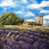 Provence, Lavendel, Château, Malerei