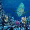 Unterwasser, Fische, Korallen, Malerei