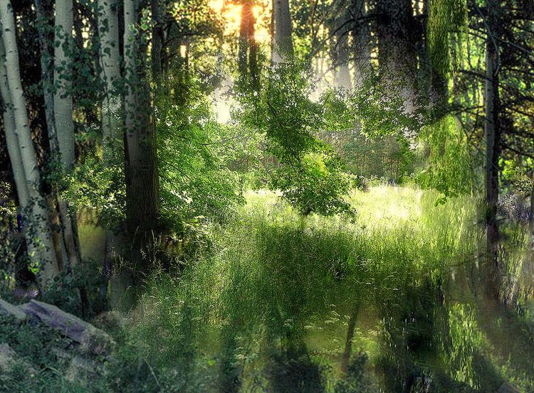 Wald, Lichtung, Outsider art, Digitale kunst, Digital