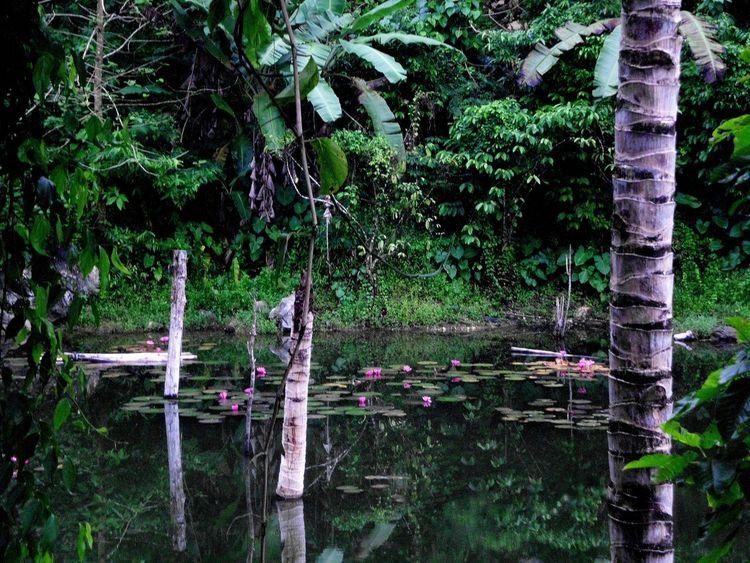 Teich tümpel, Mindanao, Digitale kunst, Digital,