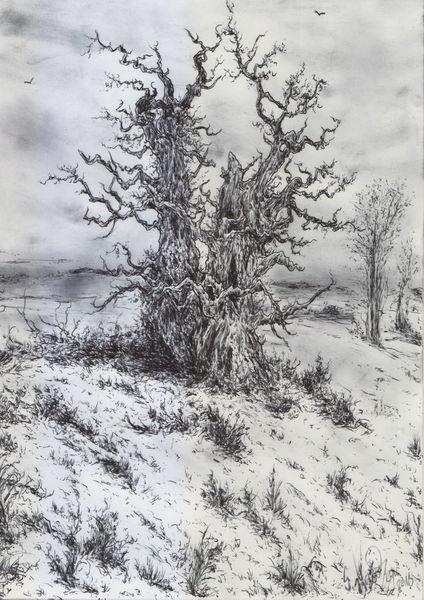 Baum, Schnee, Winter, Dunkel, Romantik, Frost