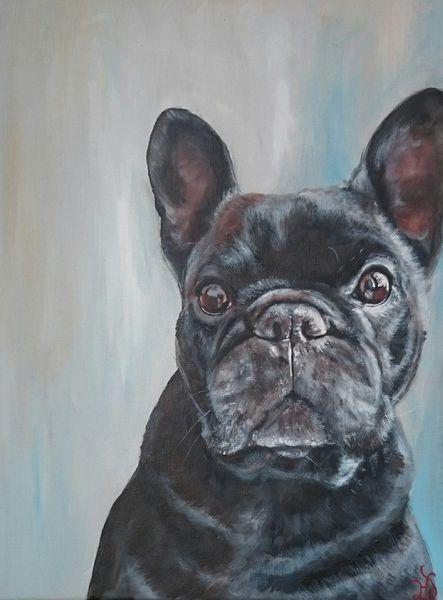 Hund, Französische bulldogge, Hundeportrait, Malerei