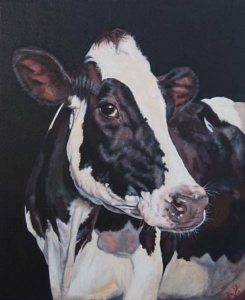 Holsteiner, Kuh, Kuhportrait, Malerei