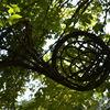Waldhorn, Garten, Sontheim im stubental, Weiden