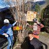 Baum, Nachwuchs, Künstlernachwuchs, Freude