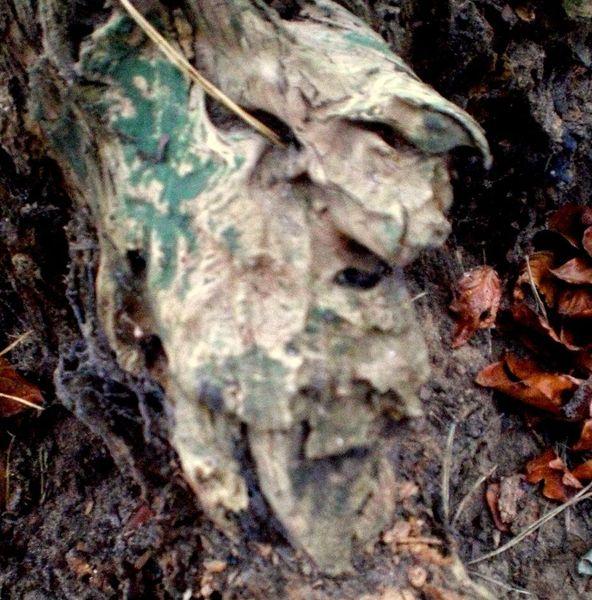 Holz, Verfall, Gesicht, Holzkopf, Natur, Wurzel