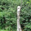 Holzskulptur, Pappelholz, Gealtert, Plastik