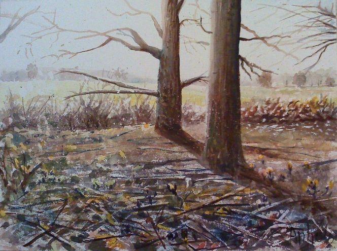 Morgen, Wald, Baum, Natur, Landschaft, Gegenlicht