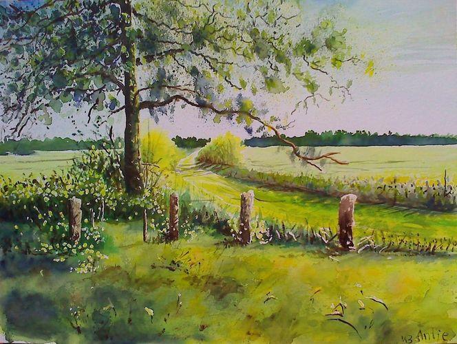 Baum, Sommer, Feld, Landschaft, Natur, Wiese