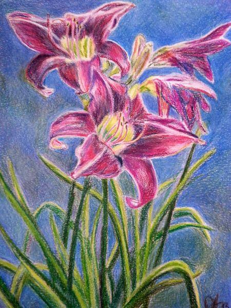 Buntstiftzeichnung, Blumen, Garten, Lilien, Blau, Grün