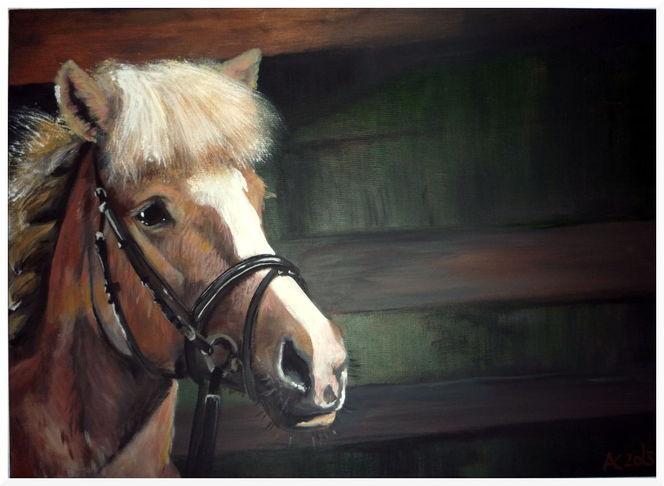 Pferde, Licht, Schatten, Pony, Portrait, Malerei