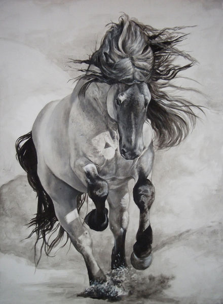 Noriker, Pferde, Reiten, Kaltblut, Schwarzweiß, Mohrenkopf