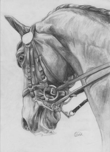 Pferdchen - Reiten, Pferde, Zeichnung, Dressurpferd von ...